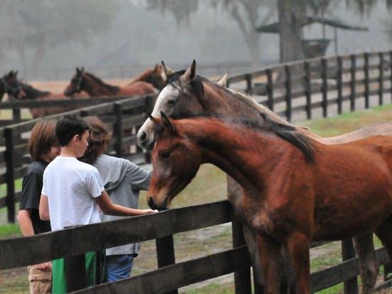 Farm Tours of Ocala